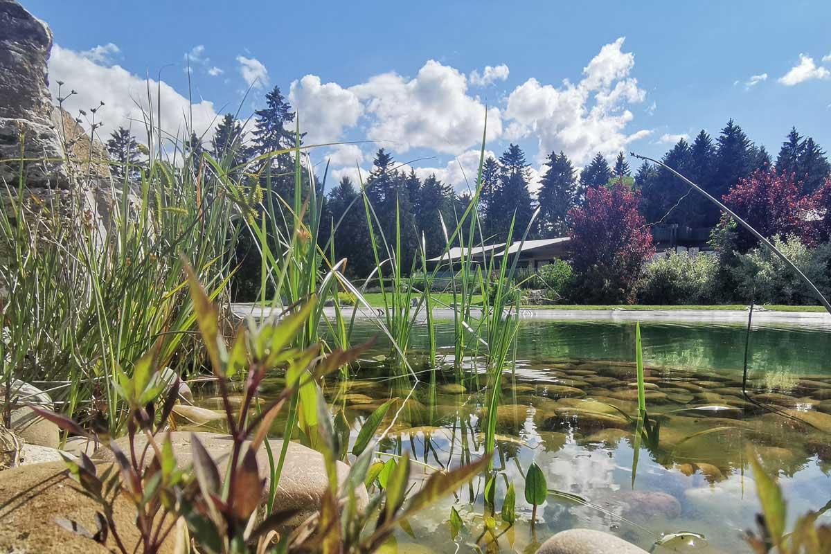 Blick über unseren Teich hinüber zum WaldCafé